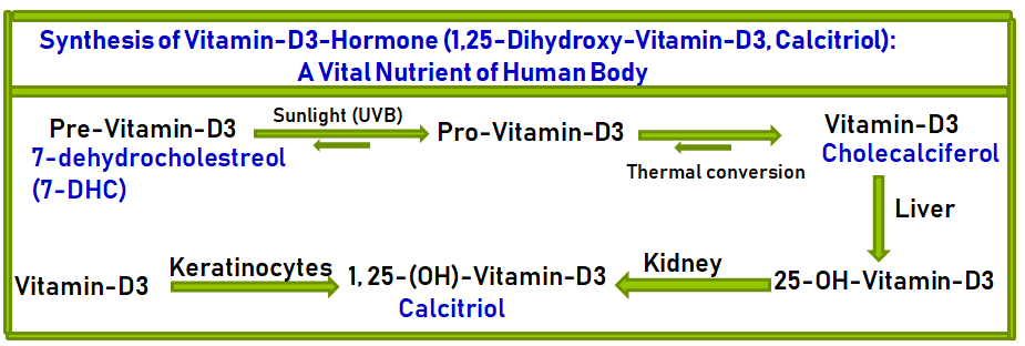 Skin Synthesis of Vitamin-D3 Hormone