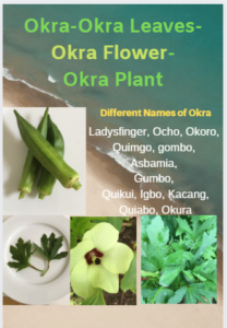 Okra-Leaves-Flower-Fruit